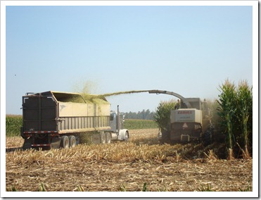 Chopping the Corn